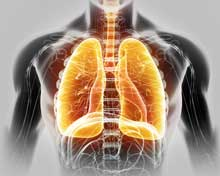 TCM: Understanding The Role Of The Lungs