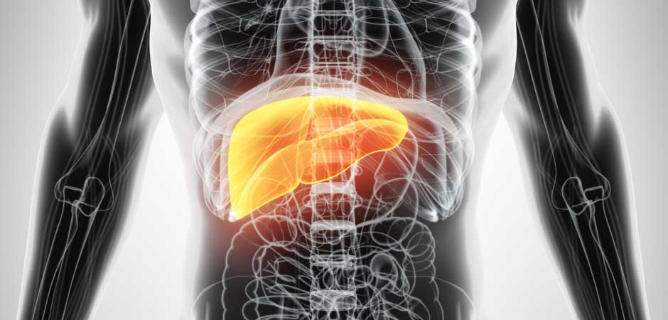 Tcm Understanding The Role Of The Liver