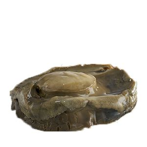 Jumbo 9 Star Imperial Black Gold Wild New Zealand Abalone